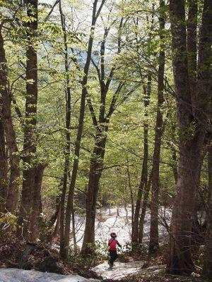 森に入るとすぐに柔らかい緑が迎えてくれました。